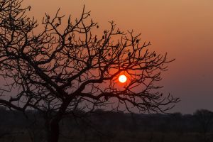 Sunset In Kafue National Park